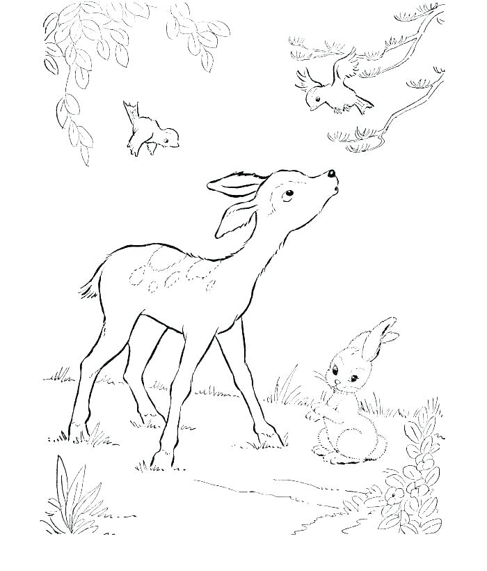 700x820 Deer Hunting Coloring Pages Deer Coloring Pages Baby Hunting