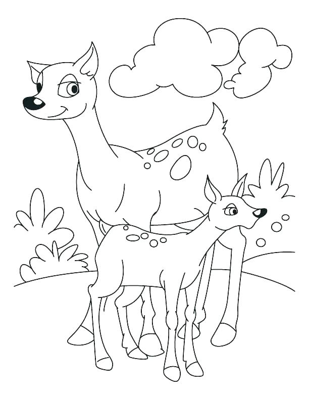 612x792 Fawn Coloring Pages Baby Fawn Coloring Pages