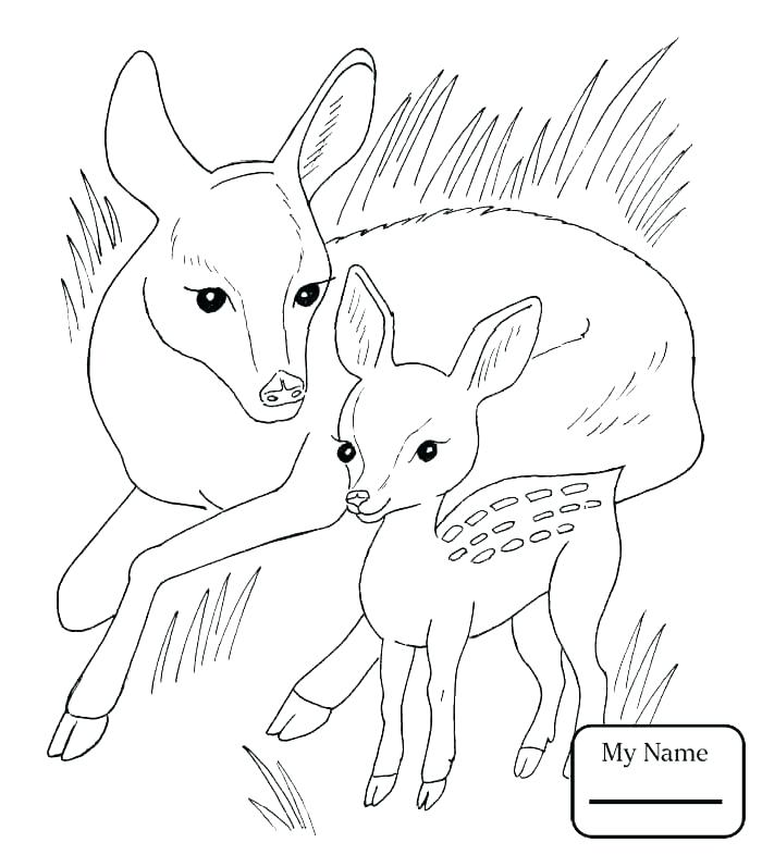 700x786 Fawn Coloring Pages Coloring Book Fawn Coloring Pages Page Central