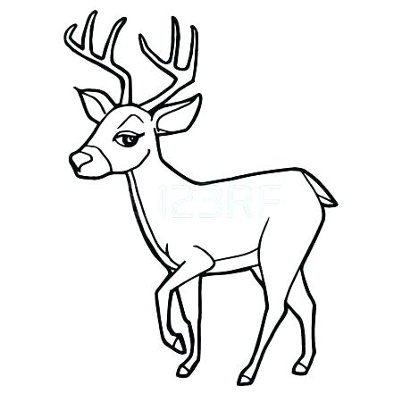 450x450 Mother And Baby Deer Coloring Pages Picture Cartoon Cute Page