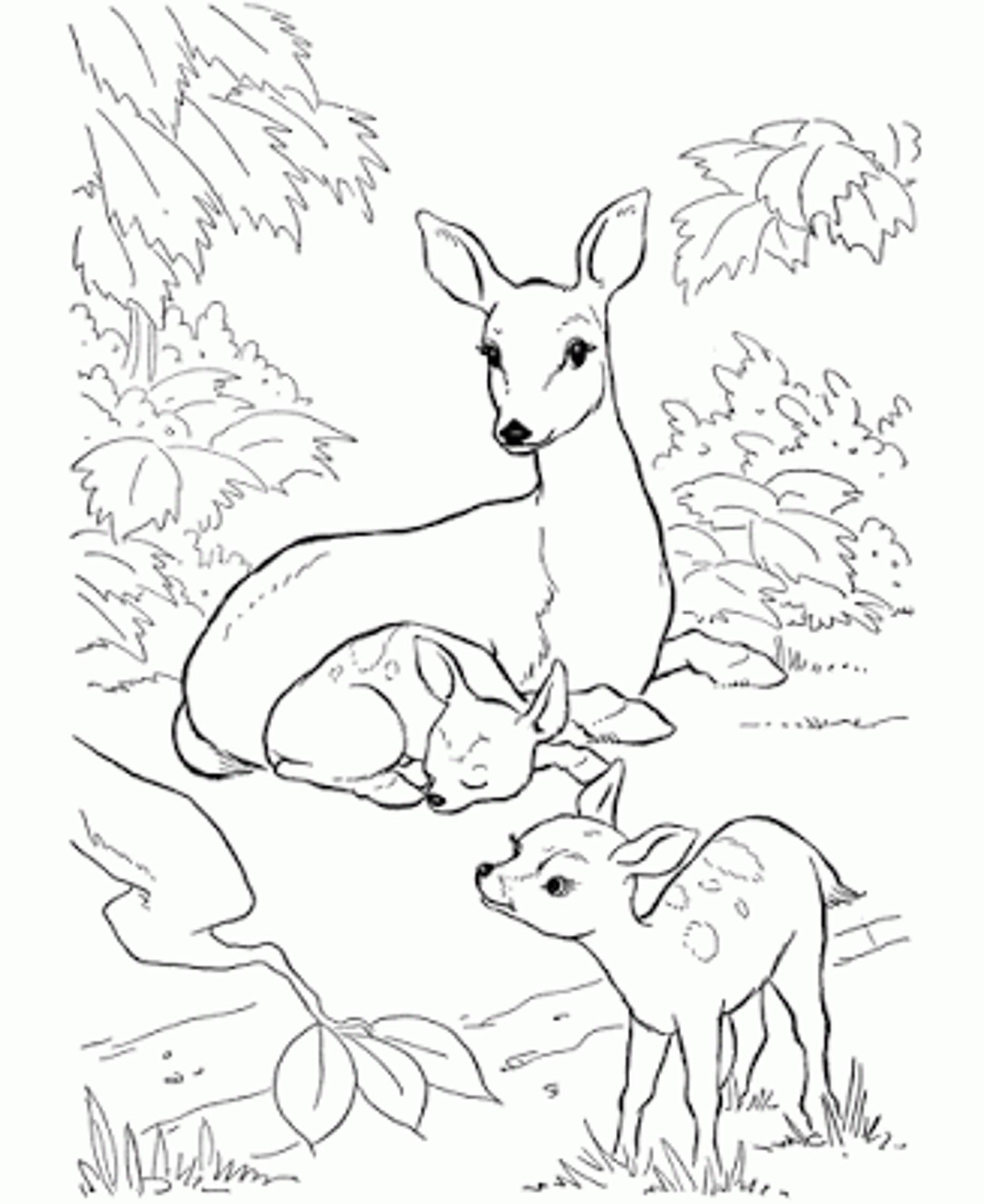 2000x2446 Baby Deer Coloring Page