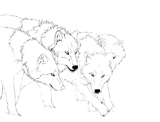618x472 Whitetail Deer Coloring Pages Baby Deer Coloring Pages Baby Deer