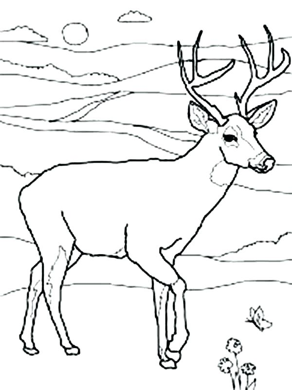 600x801 Coloring Baby Deer Coloring Pages Page Cute Baby Deer Coloring Pages