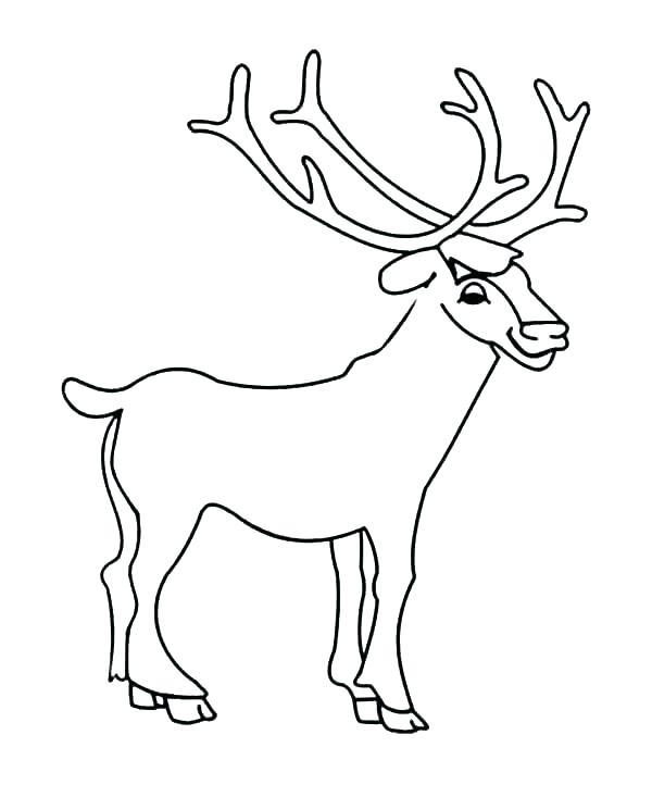 600x733 Coloring Page Deer