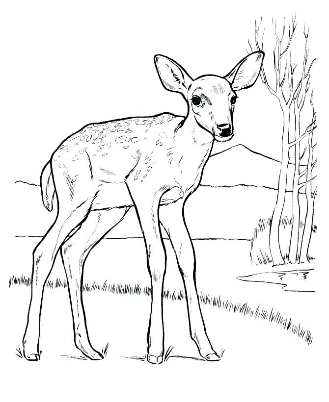 670x820 Baby Deer Coloring Pages Baby Deer Coloring Pages Medium Size