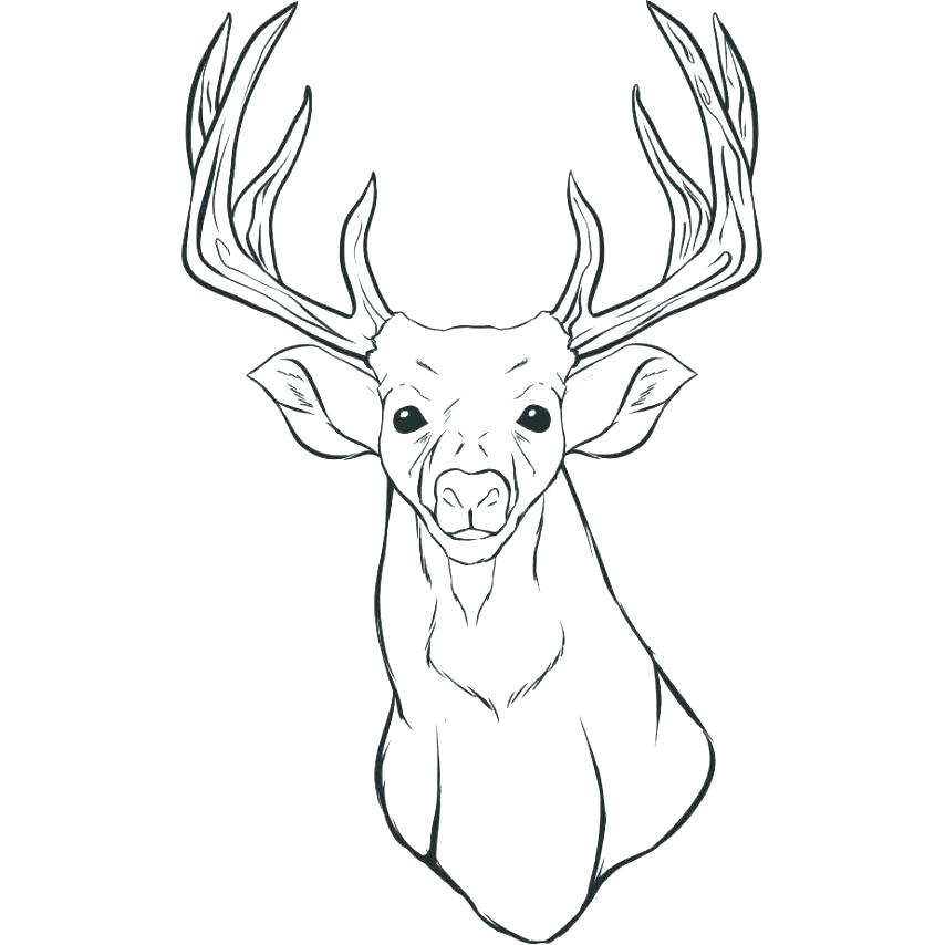854x854 Baby Deer Coloring Pages Coloring Pages Deer Whitetail Deer