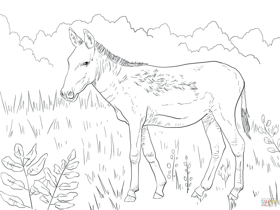 948x711 Donkey Coloring Pages Baby Ride Donkey Coloring Pages Donkey