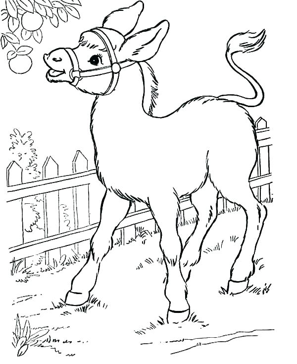 600x734 Coloring Donkey Donkey Pictures To Color Donkey Coloring Pages