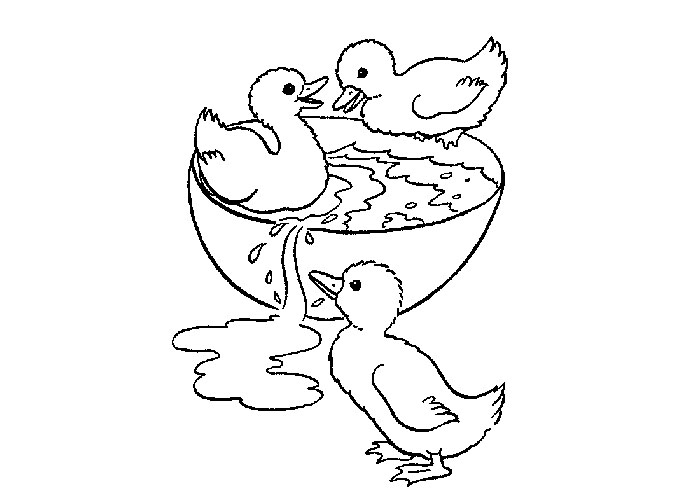 Baby Duck Coloring Pages At Getdrawings Com Free For Personal Use