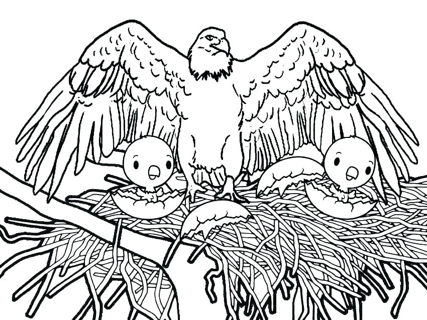 850x638 Eagle Coloring Pages Baby Eagle Coloring Pages Golden Eagle