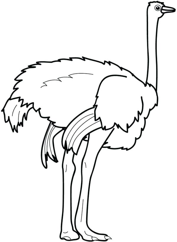 600x821 Feet Coloring Pages Ostrich Strong Page Baby Foot Coloring