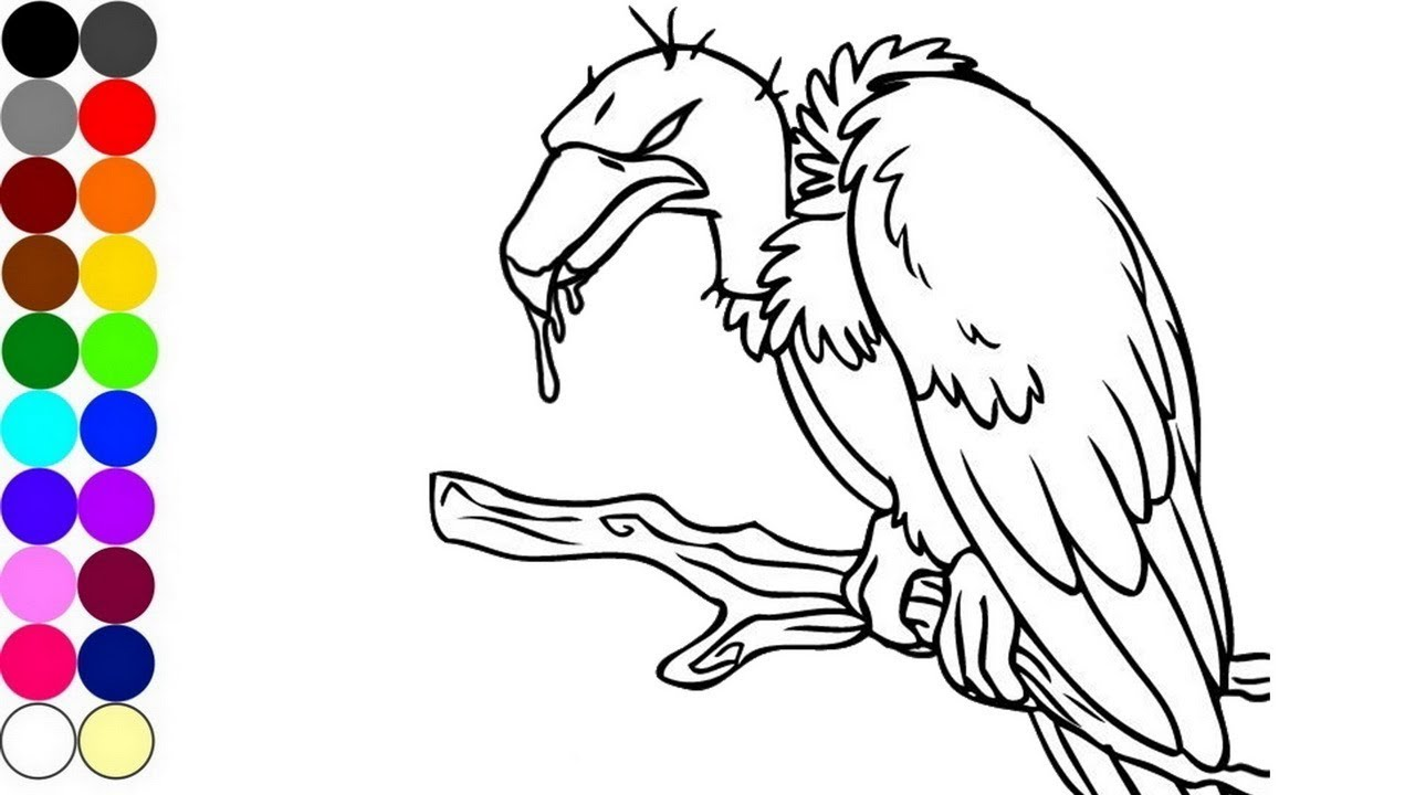 1280x720 How To Draw And Coloring A Vulture Animal Coloring Pages Baby