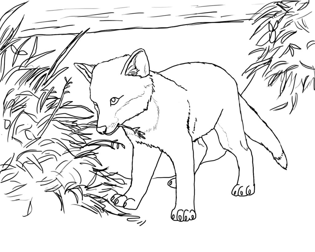 1024x819 Baby Fox Coloring Pages
