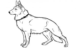 300x200 Modest Ideas German Shepherd Coloring Pages German Shepherd