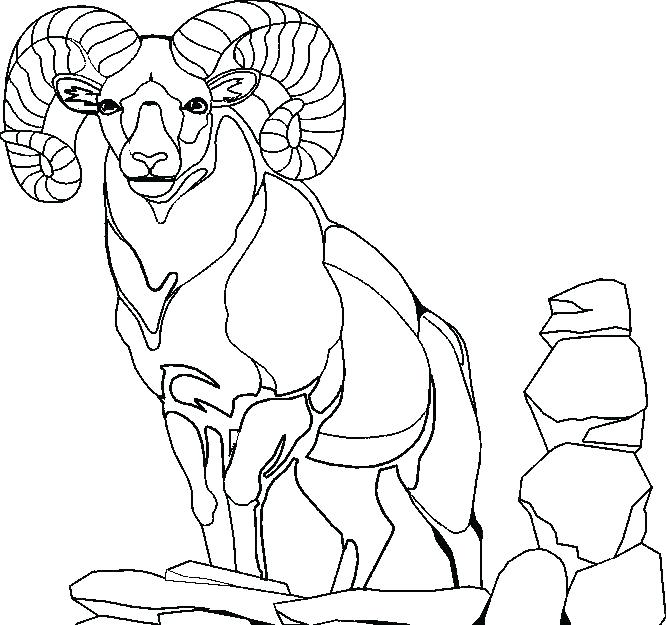 666x625 Baby Goat Colouring Pages Coloring Sheet Billy Book Example Page