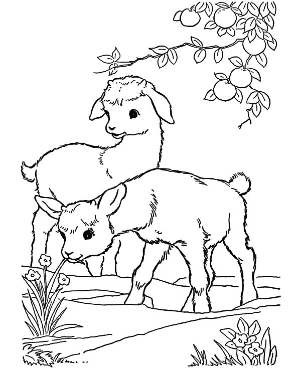600x734 Baby Goat Playing Under Orange Tree Coloring Pages Color Luna