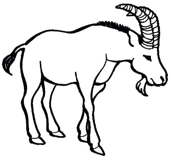 600x577 An Old Goat Coloring Pages Color An Old Goat Coloring Pages Cute