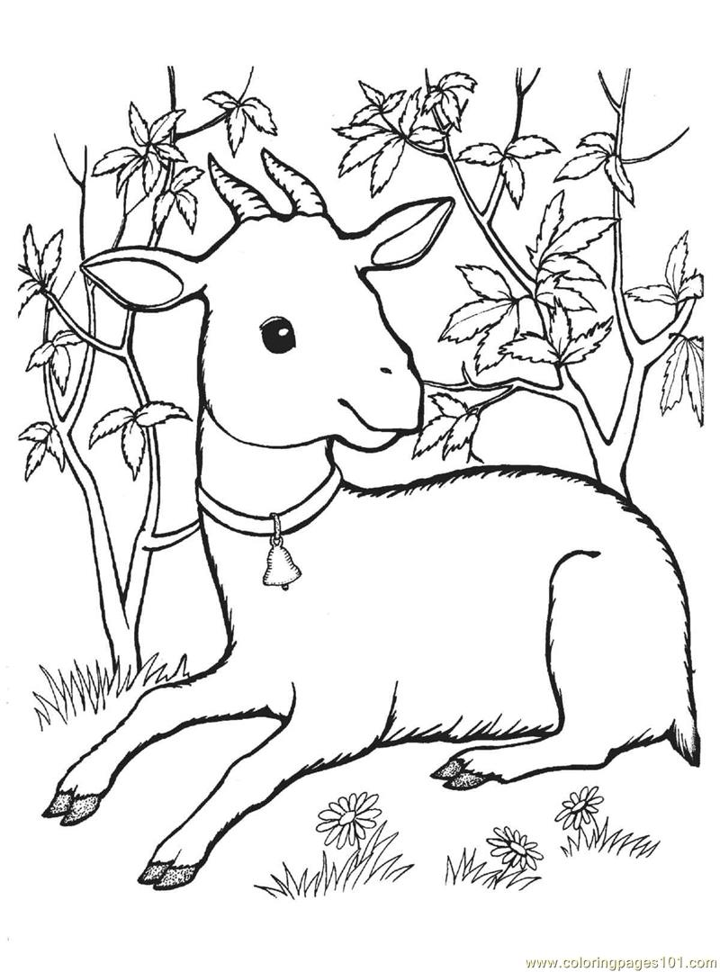 800x1080 Free Printable Goat Coloring Pages