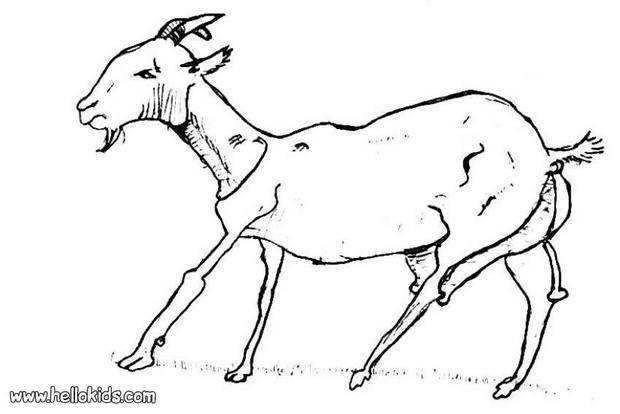 620x414 Goat Coloring Pages