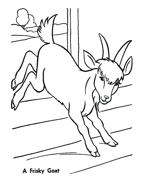 600x734 Baby Goat Coloring Pages A Frisky Goat Coloring Pages Baby Goat
