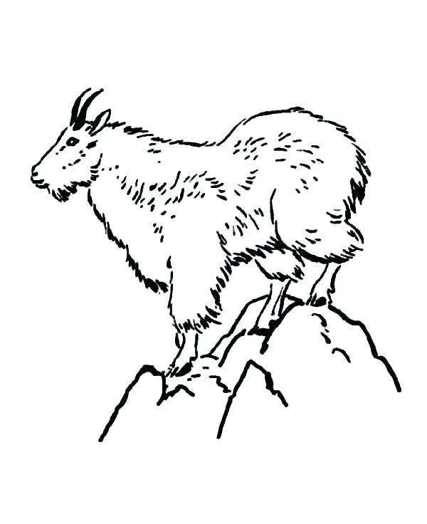600x736 Baby Goat Coloring Pages Baby Goat Coloring Page Free Pages