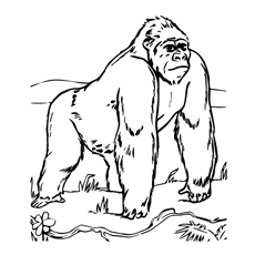 Baby Gorilla Coloring Pages