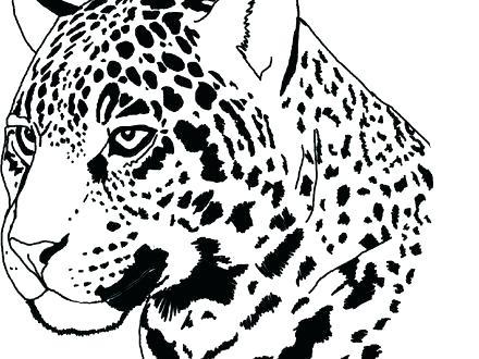440x330 Jaguar Coloring Page Jaguar Coloring Sheet Jaguar Coloring Page