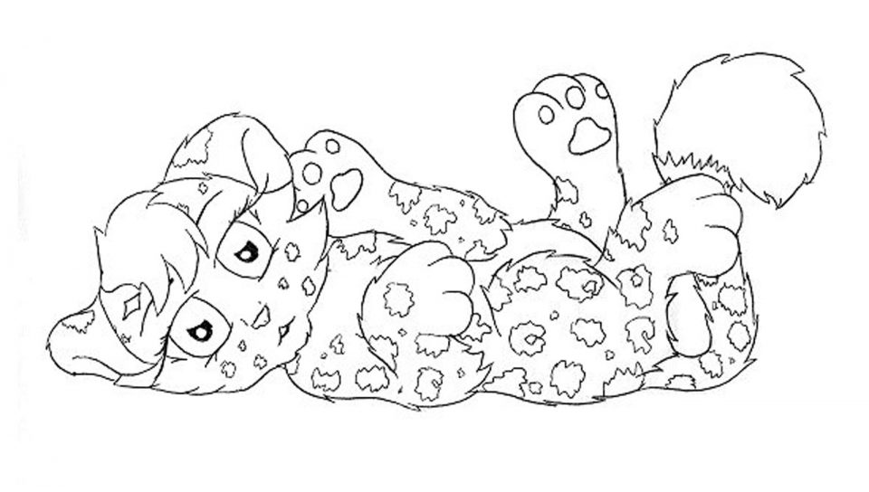 960x544 Rainforestr Coloring Pages Realistic Car Cat Page Baby For Kids
