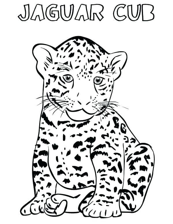 600x776 Baby Jaguar Coloring Pages Baby Jaguar Coloring Pages Free Cub