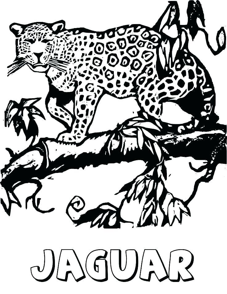 736x952 Baby Jaguar Coloring Pages Baby Jaguar Coloring Pages Ocelot
