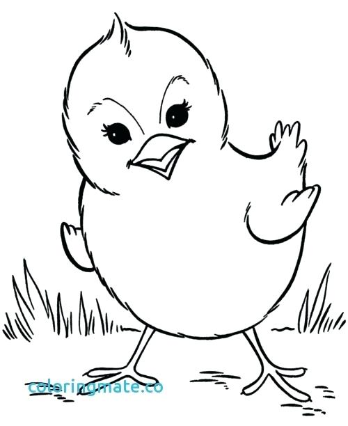 500x612 Coloring Pages Baby Animals Baby Animals Coloring Pages Fresh Free