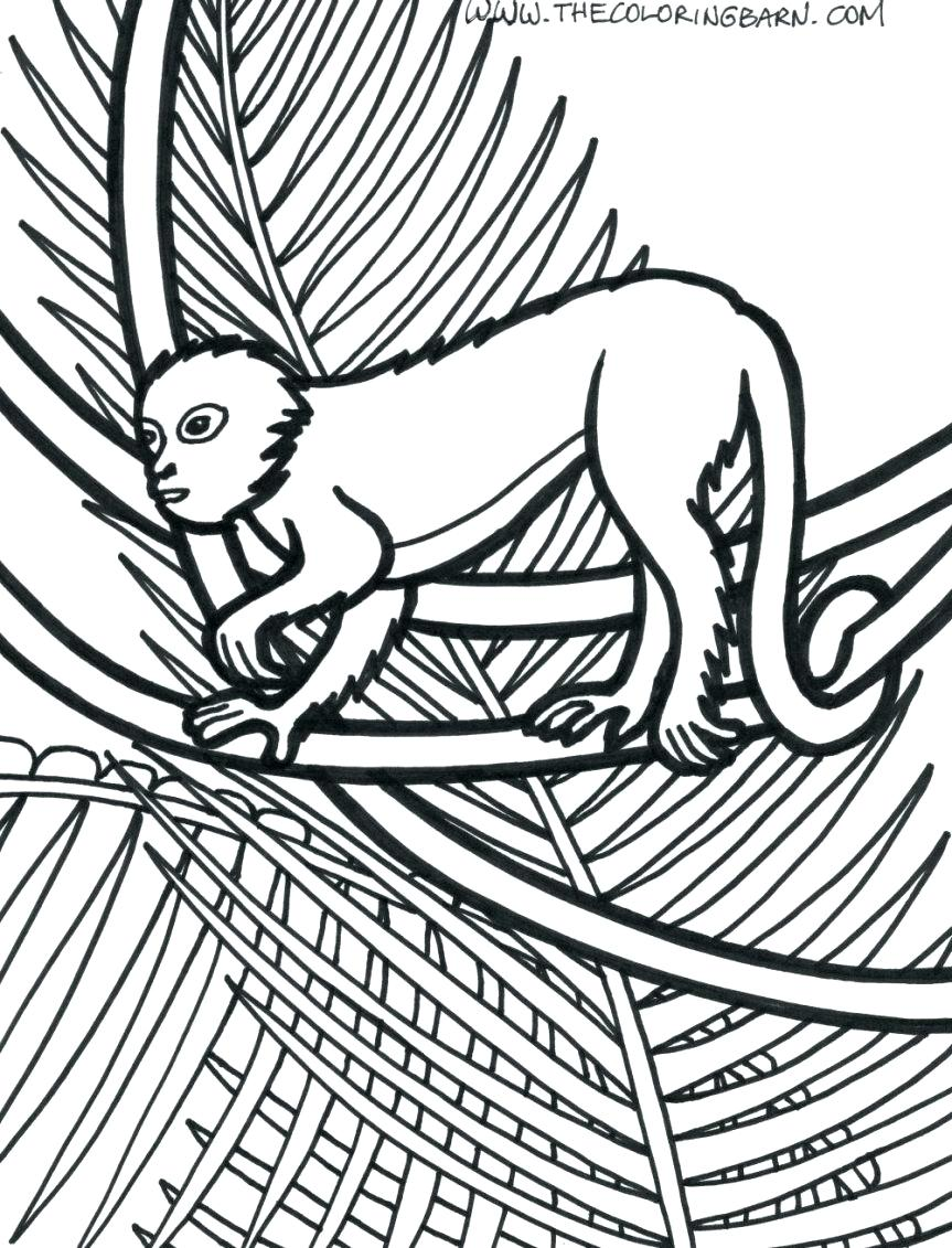 863x1131 Coloring Pages Jungle Animals Coloring Pages Plants Page Monkey