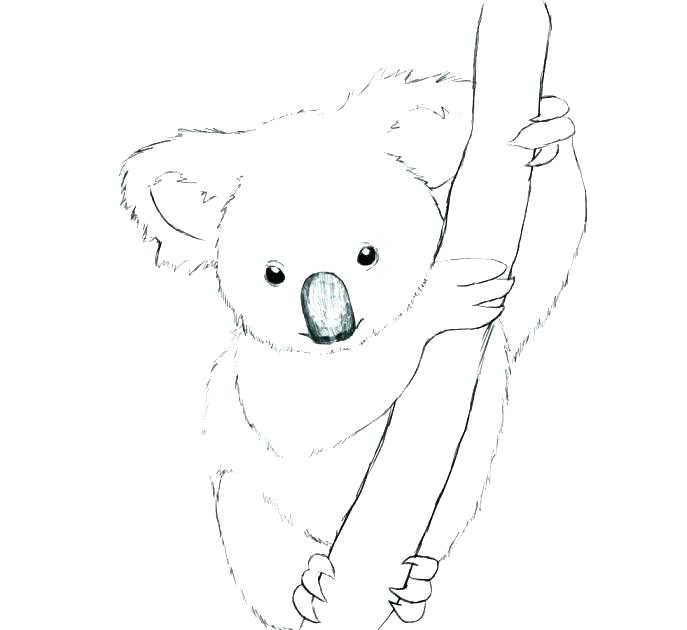 Australia Road Sign with Koala coloring page   Free Printable ...   630x687