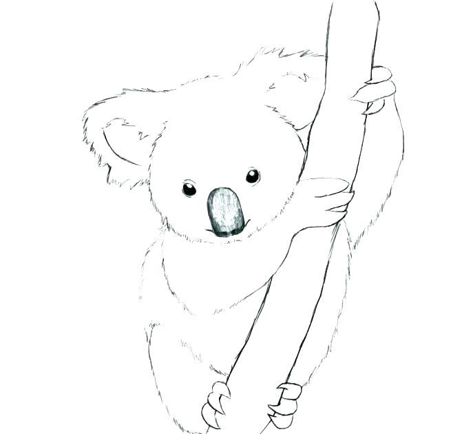 687x630 Realistic Koala Bear Coloring Pages Printable Coloring Koalas