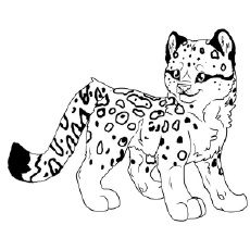 230x230 Snow Leopard Coloring Pages For Kids And Adults Snow Leopard