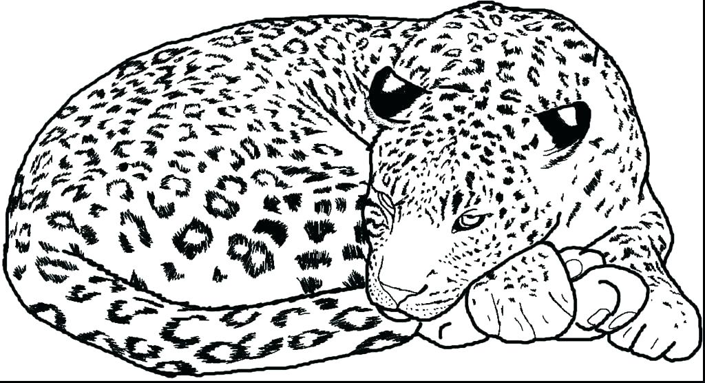 1024x556 Snow Leopard Coloring Pages Baby Leopard Coloring Pages Page