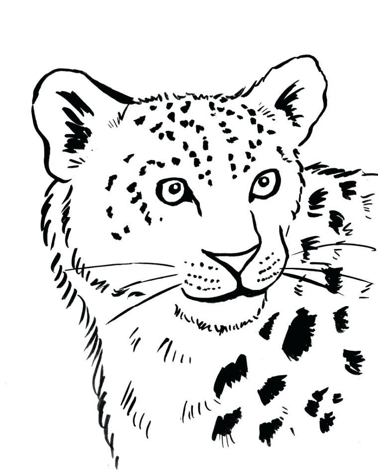 760x950 Snow Leopard Coloring Pages Snow Leopard Paint Color