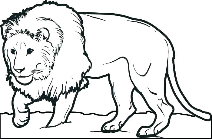 700x460 Baby Lion Colouring Pages Printable Coloring Lion Coloring Sheet