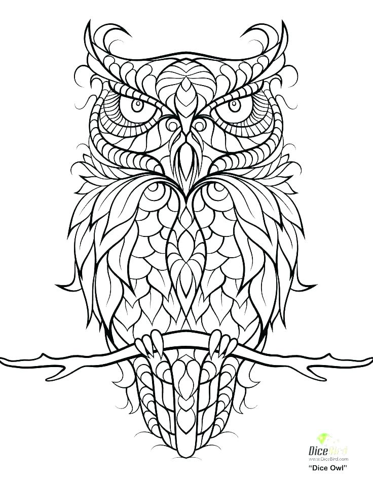 736x952 Coloring Pages Owl Owl Coloring Pictures To Print Owl Coloring
