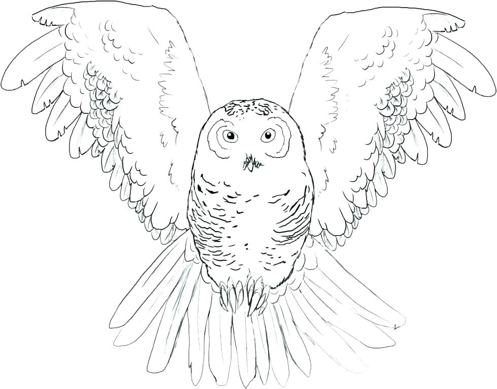 979x768 Snowy Owl Coloring Pages Snowy Owl Coloring Pages Page Burrowing