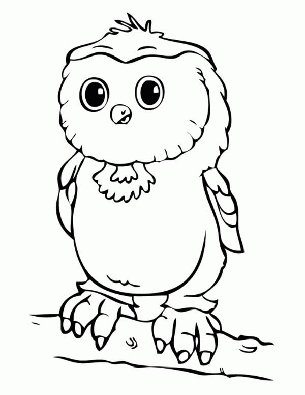 600x776 Baby Owl Coloring Page