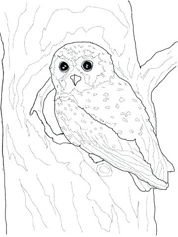 360x480 Owl Printable Coloring Pages