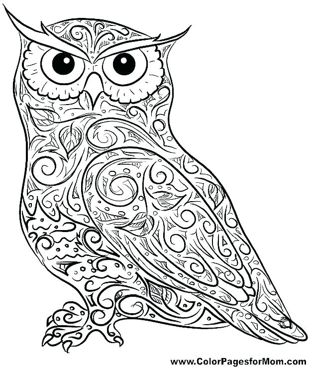 621x737 Baby Owl Coloring Pages Baby Owl Coloring Pages Owls Pictures