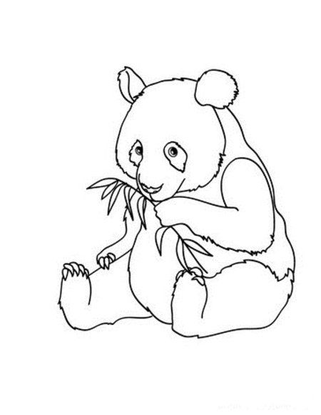Baby Panda Coloring Pages At Getdrawings Free Download
