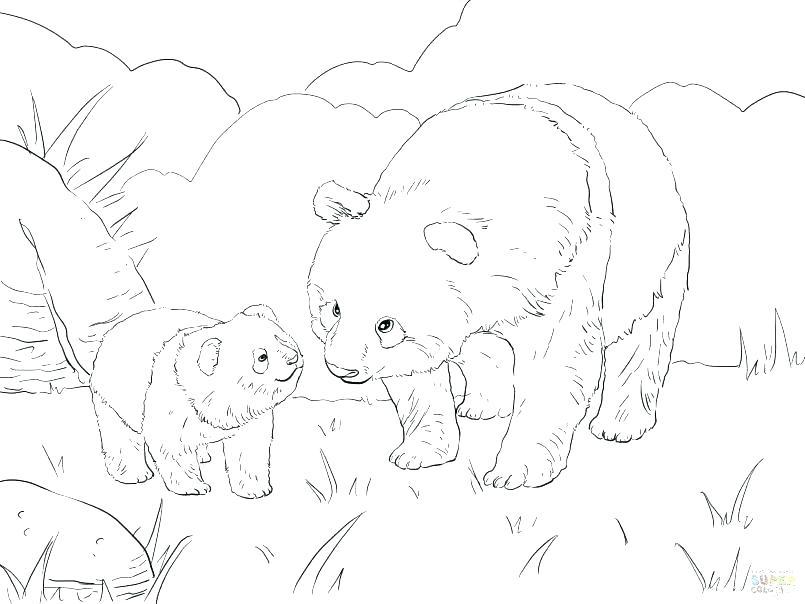 805x604 Panda Coloring Pages To Print Printable Coloring Baby Panda