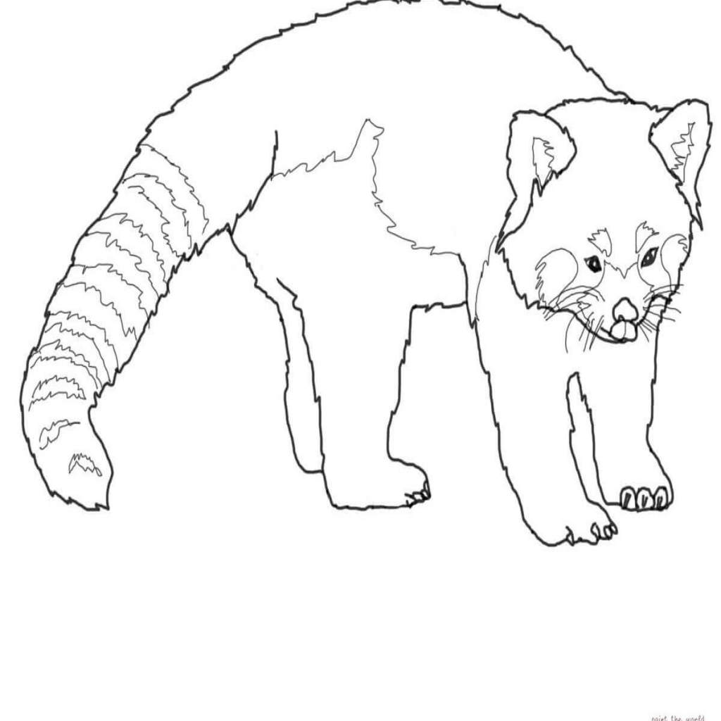 1024x1024 Unique Ba Panda Coloring Page Pictures Red Bear Pages General