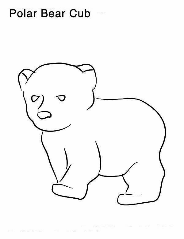 600x776 Polar Bear, Little Polar Bear Coloring Page Polar Bear