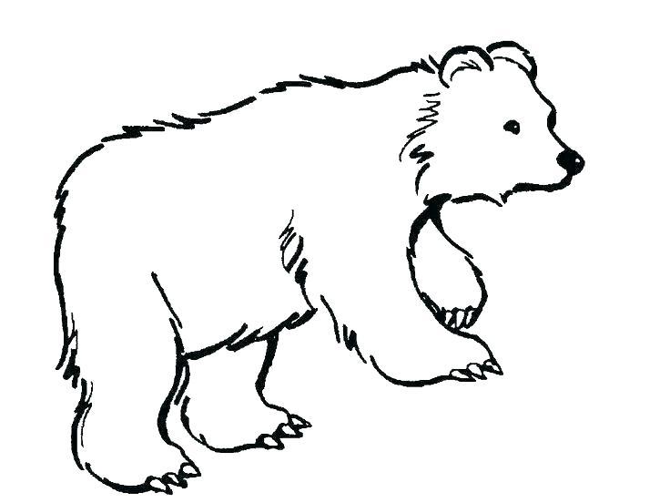 736x552 Polar Bear Coloring Page Polar Bear Coloring Page Printable Polar