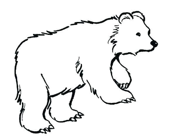 618x464 Polar Bear Coloring Pages Polar Bears Coloring Pages Polar Bears