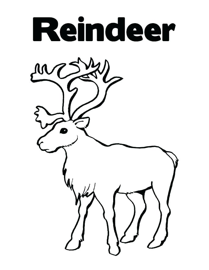 685x886 Reindeer Coloring Sheets Excellent Design Reindeer Coloring Sheets